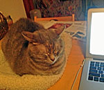 Photo of Sophie the Cat, muse to bestselling author Kathleen Ernst.