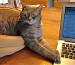 Sophie the feline muse, laying paws on Kathleen Ernst's laptop.