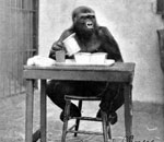 Picture of a 1930's postcard showing Suzie the Gorilla at the Cincinnati Zoo.