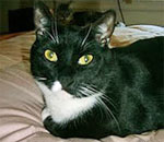 Rocco the Cat, 'author' of the Cats, Books, and ...More Cats blog