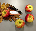 Photo of table display of heirloom apples, autumn leaves, kitchen artifacts, and a copy of an anecdote from the non-fiction history book, A Settler's Year, about Swiss immigrants receiving a Citizenship apple.