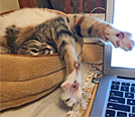 Photo of Eliza Jane feline muse to bestselling author Kathleen Ernst.