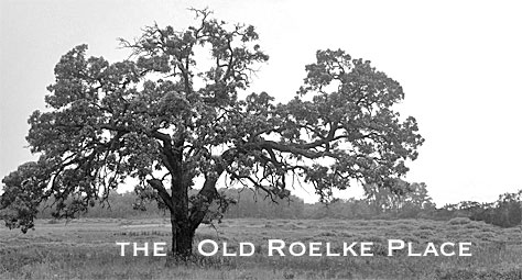 Photo of oak tree taken at the Scuppernong River Habitat Area in the Kettle Moraine State Forest Southern Unit by author Kathleen Ernst. Photo edited by Scott Meeker.